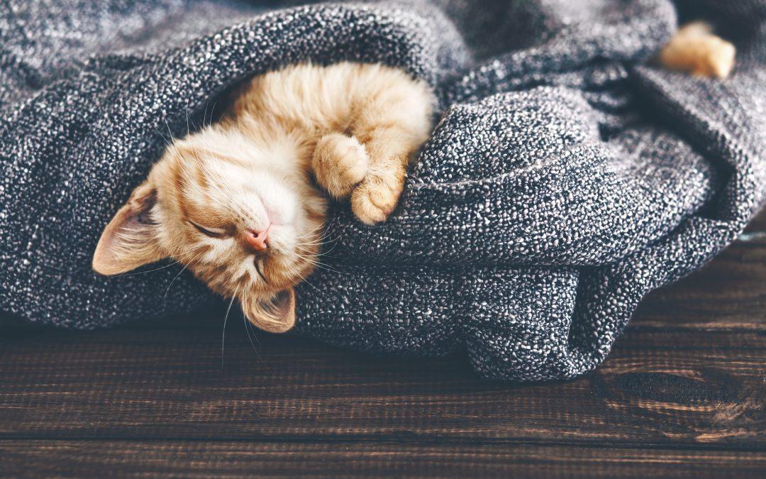 Cómo cuidar a tu gato en invierno
