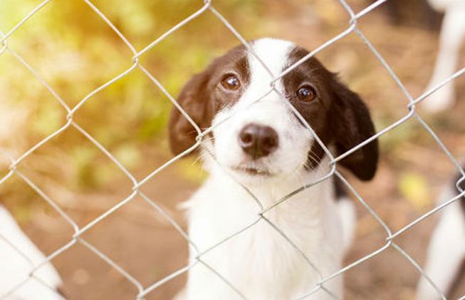 5 consideraciones a la hora de adoptar un perro (2)