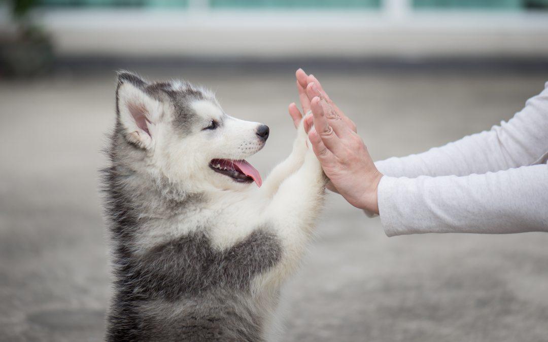 Primeros pasos a seguir con un chachorro