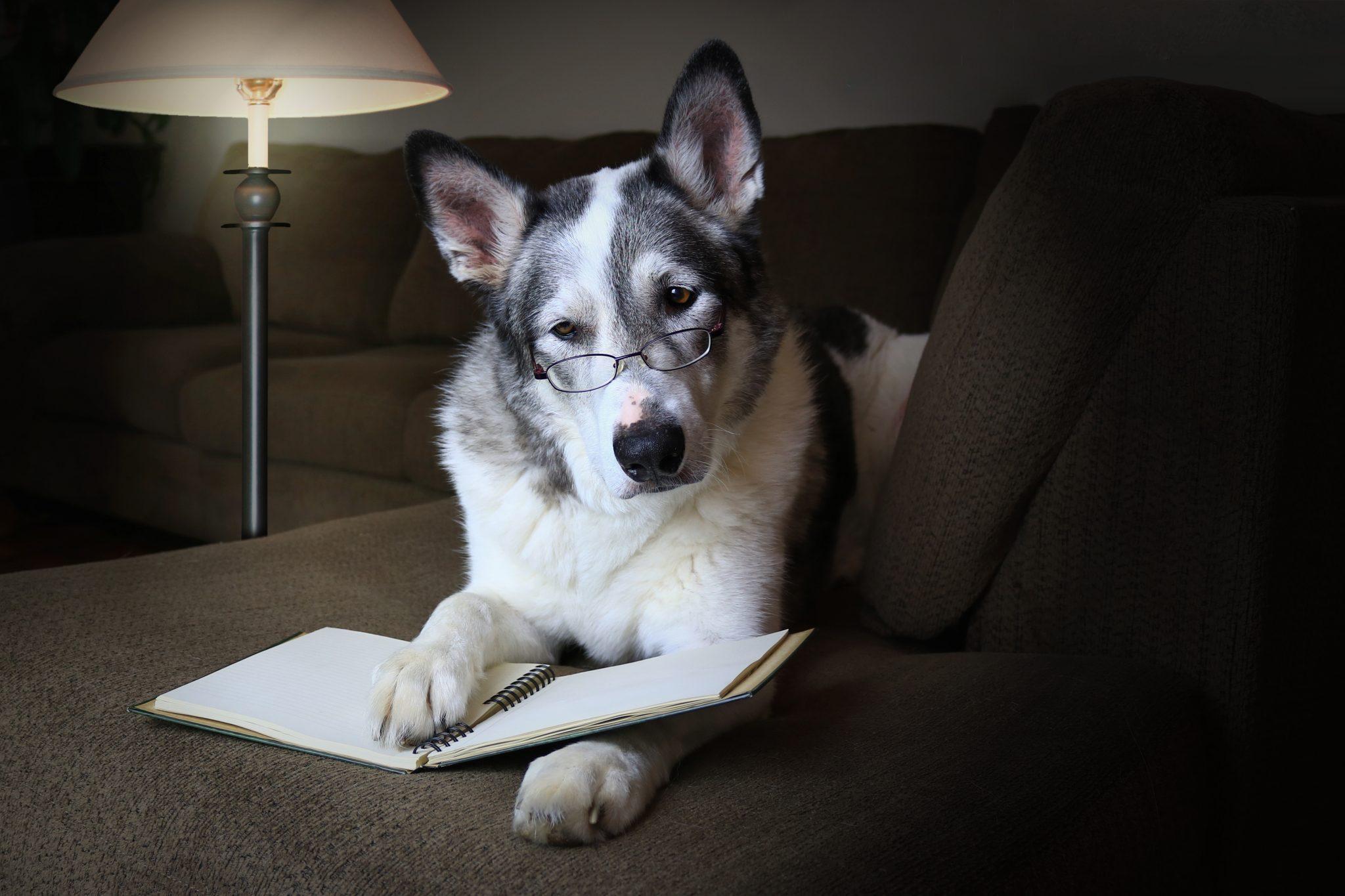 Ranking de las 10 razas de perros más inteligentes