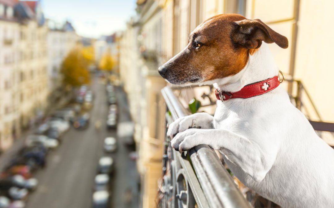 La inteligencia canina: ¿cómo piensa tu perro?