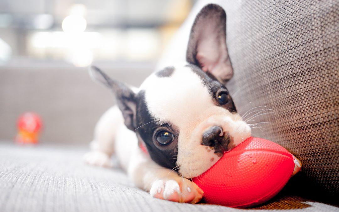 ¿Cómo debe de socializarse un cachorro?