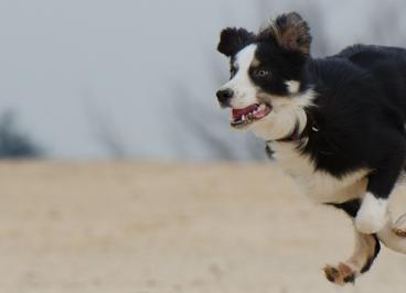 Beneficios de hacer ejercicio con tu perro