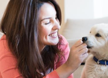 Beneficios de la lisina en el pienso para perros