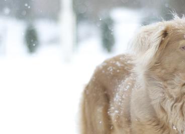 Cómo cuidar a tu perro en invierno
