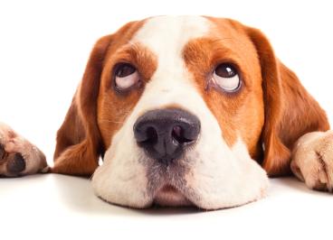 Ingredientes imprescindibles en el pienso para perros