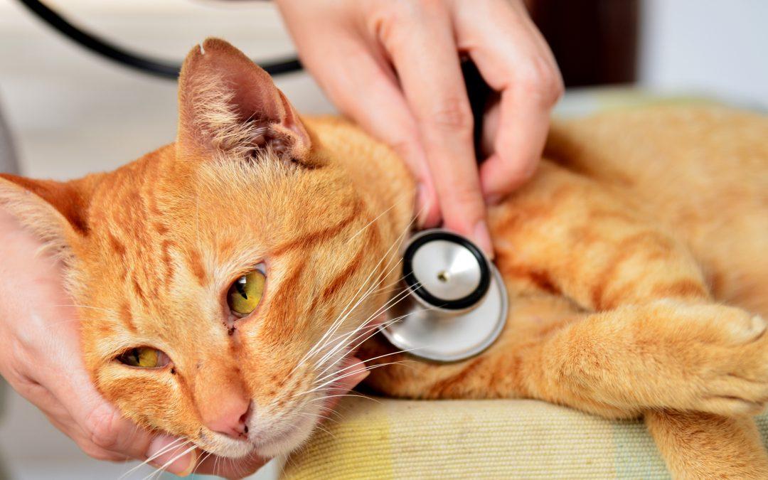 ¿Qué es la Leucemia felina?: síntomas y prevención