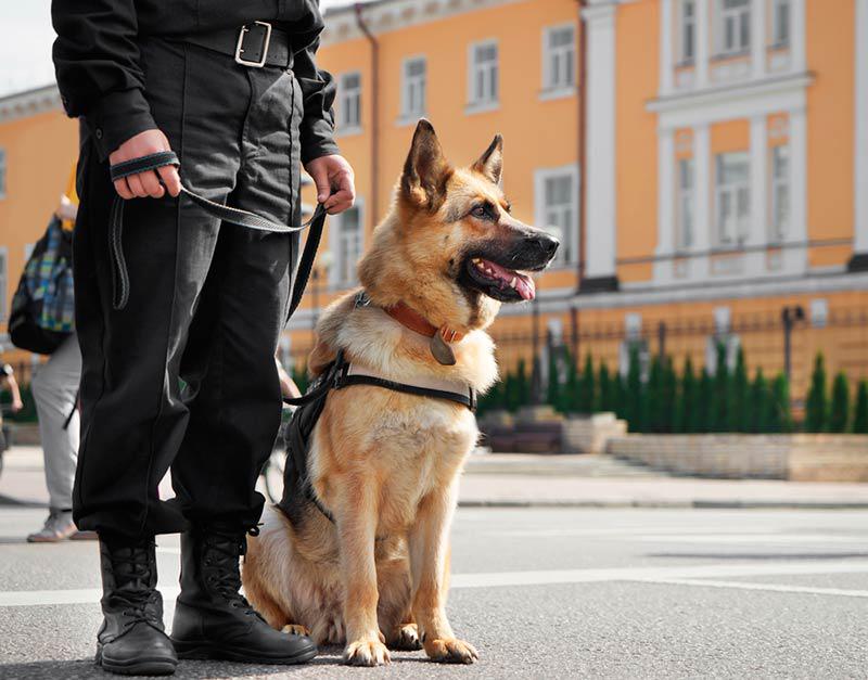 Caractéristicas y funciones de los perros policía