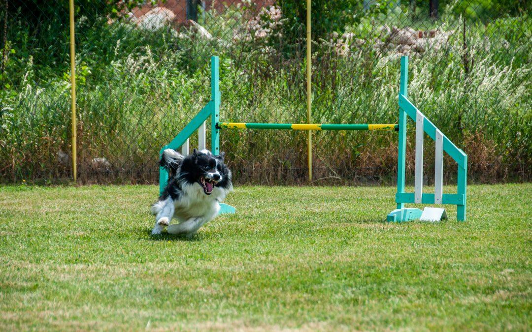 Agility: un deporte perfecto para divertirse con tu perro