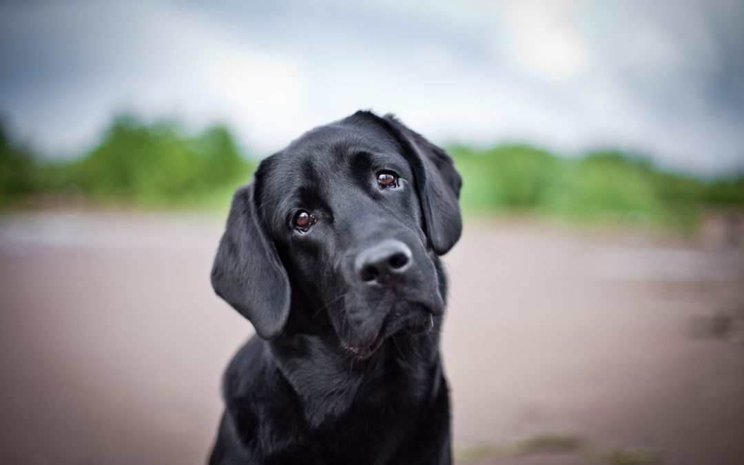 Cómo paliar la ansiedad en perros