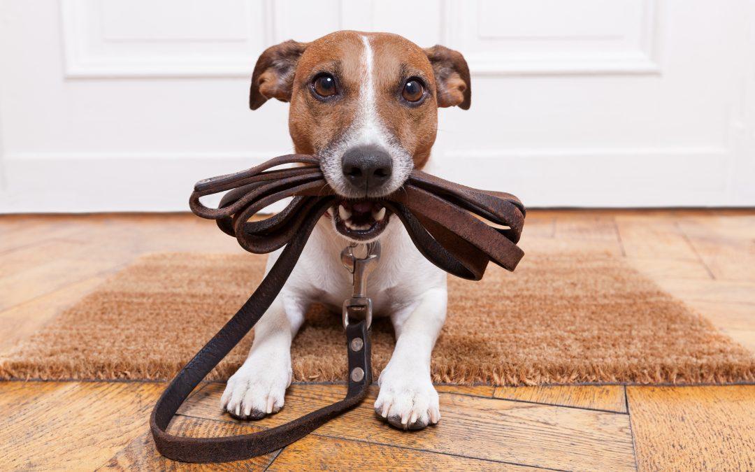Pautas para la educación de un perro