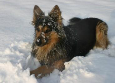 La alimentación del perro en invierno