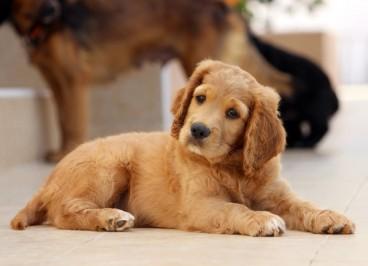 Faringitis canina: qué es, causas, síntomas y prevención