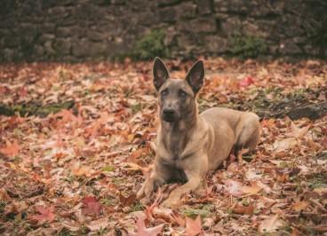 Las enfermedades de perros en otoño