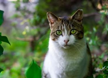 Enfermedades más comunes del gato en otoño