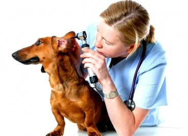 Otitis: ¿Qué es? Causas, síntomas y prevención