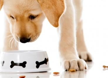 Nutrientes necesarios para la alimentación del perro
