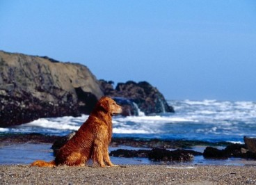 Enfermedades más comunes del perro en verano