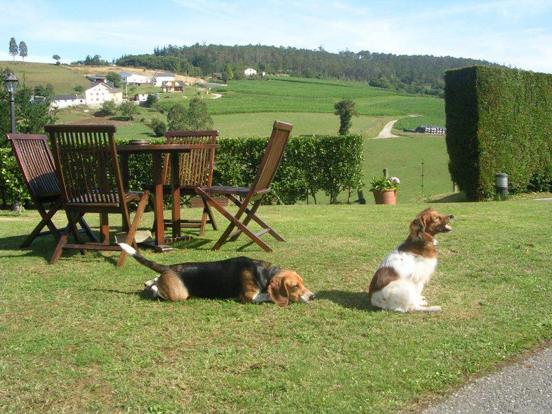 ¡Escápate a una casa rural con tu perro!