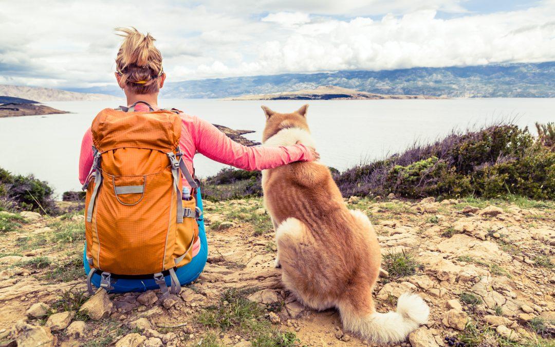 Deportes para practicar con tu perro