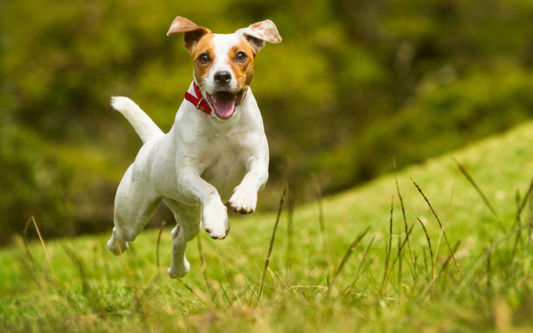 ¿Qué suplementos puedo aportar a mi perro?