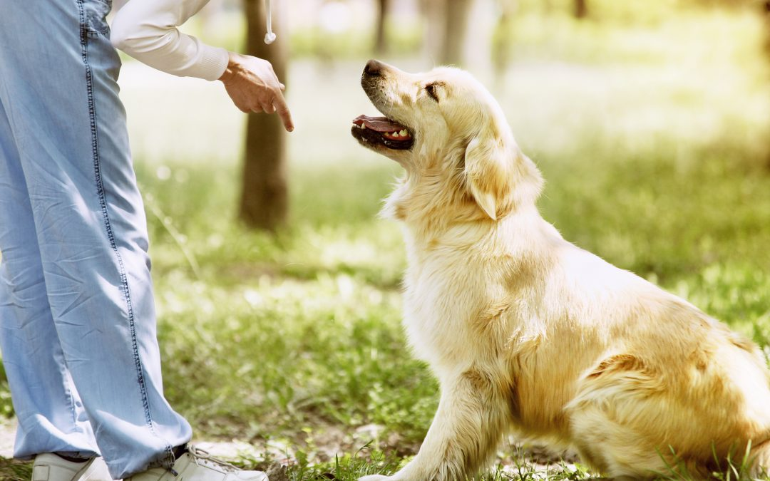 ¿Cuáles son los tipos de adiestramiento canino?