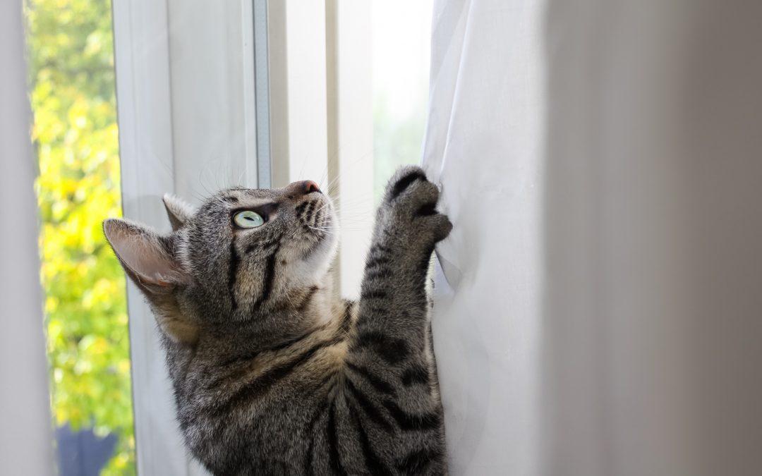 Consejos para la educación de un gato