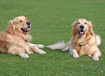 Diabetes canina: qué es, síntomas y tratamiento