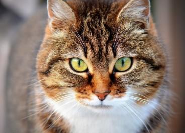 Causas de estrés de los gatos