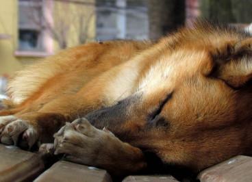 Leishmaniosis en perros, síntomas y tratamiento