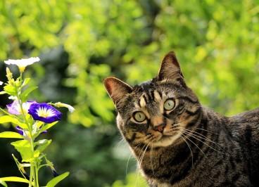 El cuidado del pelo del gato en primavera