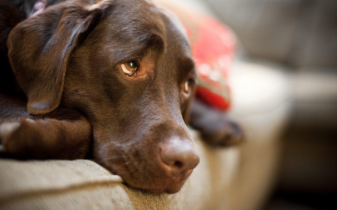 Cáncer en Perros. Tipos y síntomas