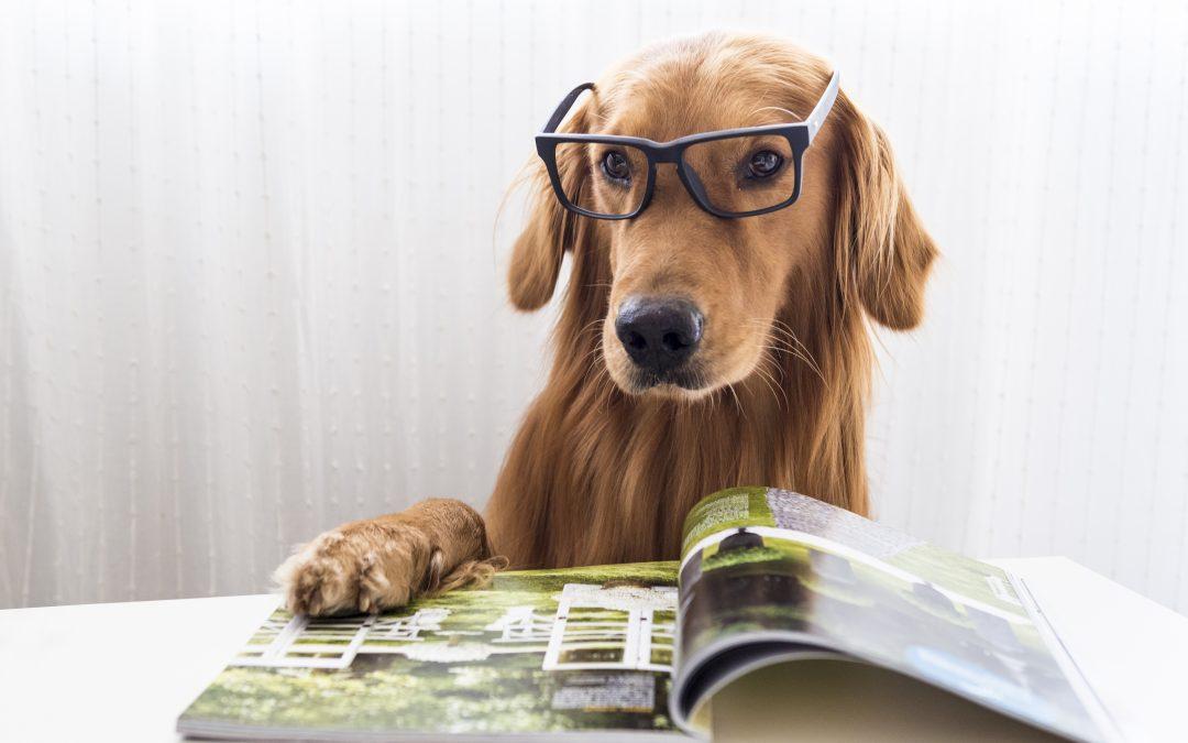13 curiosidades sobre los perros que quizás no conocías