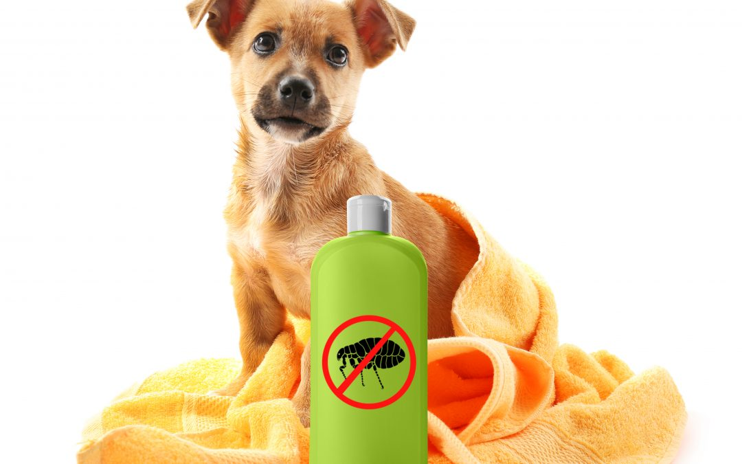 La desparasitación interna y externa de los perros