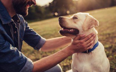 La esterilización de una perra: ¿cuándo se hace?