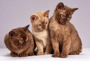 Peritonitis felina: qué es, síntomas y contagio