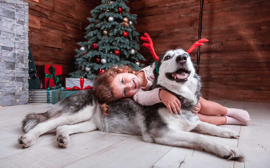 Reasons to adopt a dog at Christmas