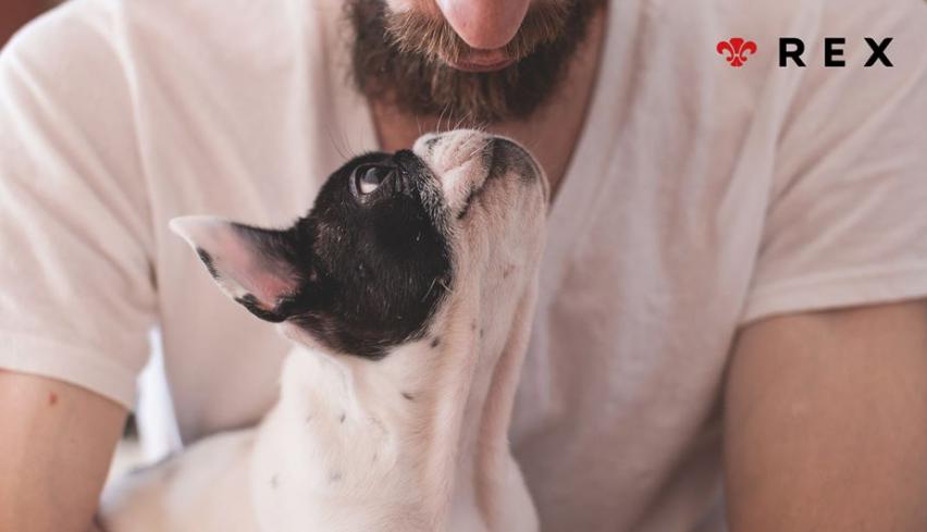 Mitos sobre los perros y gatos